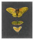 Butterflies on Slate I Giclee Print by Naomi McCavitt