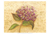 Hydrangea Love I Prints by Wendy Russell