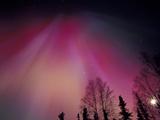 Curtains of Colorful Northern Lights Above Fairbanks, Alaska, USA Alu-Dibond von Hugh Rose