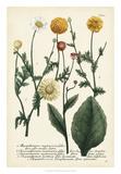 Saffron Garden II Giclee Print by  Weinmann