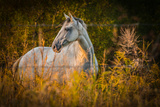 Grey Horse in Field Photographic Print by Stephen Arens