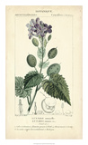 Botanique Study in Lavender III Giclee Print by  Turpin