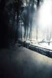 Woodland in Winter Photographic Print by Mia Friedrich