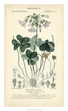 Botanique Study in Lavender I Giclee Print by  Turpin