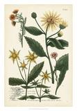Saffron Garden I Giclee Print by  Weinmann