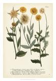 Saffron Garden III Giclee Print by  Weinmann