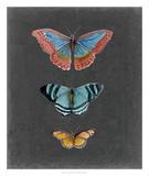 Butterflies on Slate III Giclee Print by Naomi McCavitt