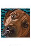 Dlynn's Dogs - Bunsen Print by Dlynn Roll