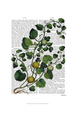 Squash Vine 4 Posters by  Fab Funky
