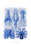 Octopus & Squid Blue Print by  Fab Funky