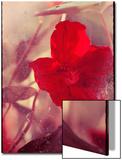 Red Flowers Prints by Mia Friedrich