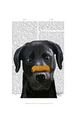 Black Labrador With Bone on Nose Prints by  Fab Funky