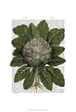 Cauliflower Posters by  Fab Funky