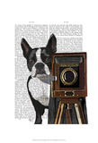 Boston Terrier Photographer Prints by  Fab Funky