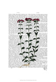 Italian Carnation 6 Prints by  Fab Funky
