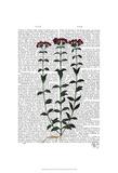 Italian Carnation 6 Prints by  Fab Funky