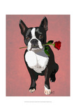 Boston Terrier with Rose in Mouth Posters by  Fab Funky