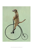 Meerkat on Black Penny Farthing Art by  Fab Funky