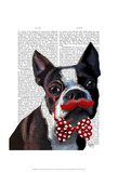 Boston Terrier Portrait with Red Bow Tie and Moustache Posters by  Fab Funky