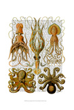 Octopus and squid Prints by  Fab Funky