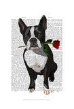 Boston Terrier with Rose in Mouth Reprodukcje autor Fab Funky