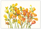 Freesia I Giclee Print by Tim