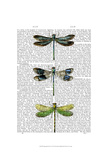 Dragonflies Print 2 Prints by  Fab Funky
