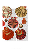 Red Clam Shells Print by  Fab Funky