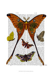 Moth Plate 1 Print by  Fab Funky
