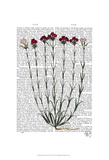 Italian Carnation 4 Prints by  Fab Funky
