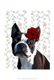 Boston Terrier with Rose on Head Posters by  Fab Funky