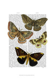 Moth Plate 3 Posters by  Fab Funky