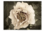 Golden Era Peony II Prints by Rachel Perry