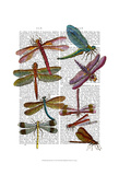 Dragonfly Print 3 Prints by  Fab Funky