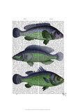 Blue and Green Fish Trio Poster by  Fab Funky