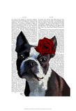 Boston Terrier with Rose on Head Prints by  Fab Funky