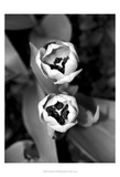 Floral Portrait IV Prints by Jeff Pica