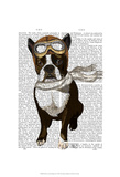 Boston Terrier Flying Ace Print by  Fab Funky