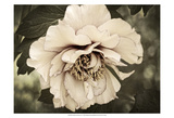 Golden Era Peony IV Prints by Rachel Perry