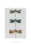 Dragonflies Print 1 Posters by  Fab Funky