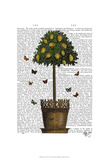Lemon Tree Posters by  Fab Funky