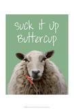Suck It Up Buttercup Sheep Print Schilderijen van  Fab Funky