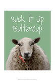 Suck It Up Buttercup Sheep Print Prints by  Fab Funky