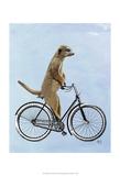 Meerkat on Bicycle Reprodukcje autor Fab Funky