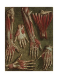 A Group of Dissected Hands, 1745-46 Giclee Print by Jacques-Fabien Gautier d'Agoty