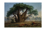 Gouty Stem Tree Giclee Print by Thomas Baines