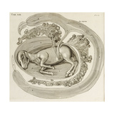 An Animal in the Womb, 1738 Giclee Print by Hieronymus Fabricius ab Aquapendente