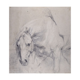 Head and Forequarters of a Gray Horse Giclee Print by Sir Anthony Van Dyck