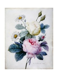 Bouquet of Roses with Daisies, Published 1834 Giclee Print by Pierre Joseph Redoute