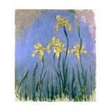 Yellow Irises; Les Iris Jaunes, C.1918-1925 Impressão giclée por Claude Monet